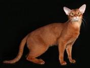 权志龙的猫为什么叫iye?gd的猫iye是什么品种?