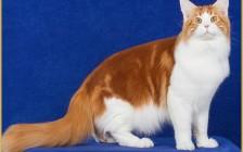 养一只纯种猫的平均成本是多少?养纯种猫都有哪些费用开支?