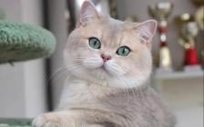 《种公种母交配失败的原因分析?》公猫、母猫经验不足的解决方案?