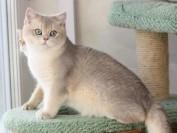 猫咪肢体语言:猫为什么喜欢蹭人的脚?