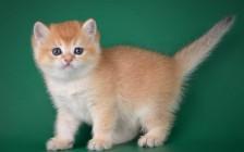 收养流浪猫吉利吗?收养流浪猫要怎么处理?