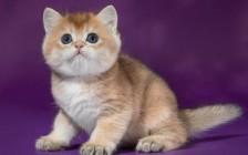 什么是应激反应?猫应激反应的表现