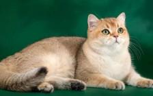 《怎么知道母猫快要分娩生小猫了?》母猫分娩的迹象