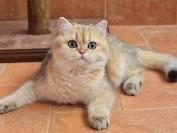 如何给猫打针?给猫注射的准备工作有哪些?猫打针注射详解