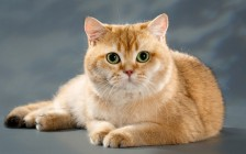 引起猫贫血的原因,确定贫血是再生性或非再生性,猫贫血主要疗法