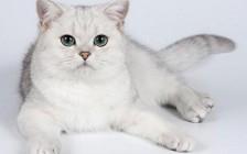 【绝育】母猫绝育手术费用?绝育注意事项?