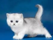 《帮助母猫接生需要注意的15个要点?》如何帮助母猫接生?