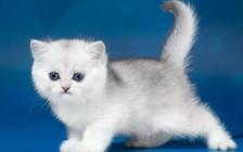猫咪中毒后该怎么办?吃什么解毒药?