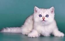 《猫舍最实用的日常消毒方案详解?》猫舍消毒用哪种消毒产品比较好?
