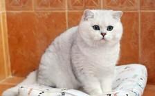 猫被咬伤的早期症状,猫咪脓肿、脓液流出的主要疗法:抗生素