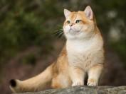 猫粮哪个好?进口猫粮和国产猫粮哪个好?
