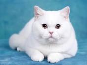 你知道怎么测量猫的体温吗?
