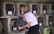 俄罗斯莫斯科国际宠物运输、宠物回国、国际宠物托运、宠物清关悉知的细节