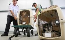 英国、瑞士、新加坡等指定国家,国际宠物托运回国的注意事项