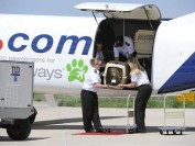 俄罗斯莫斯科、乌克兰等非指定国家,国际宠物运输回国注意事项
