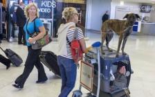 英国、澳大利亚等指定国家,宠物运输携带宠物入境信息登记表
