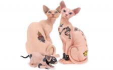 斯芬克斯猫怎么纹身的?谈斯芬克斯猫纹身