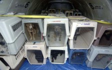 俄罗斯莫斯科、乌克兰国际宠物托运回国后,如何办理《动物检疫合格证明》?
