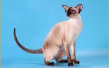 什么是猫放线菌病?猫放线菌病的各种表现