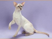 如何让猫保持健康?监视猫砂盆、喂猫注意事项有哪些?