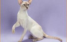 要不要给家里的猫咪买个猫爬架呢?