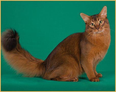猫炸毛是什么意思?猫为什么炸毛?
