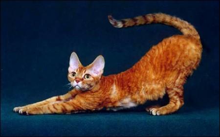 为什么猫有九条命?谈九命猫妖跳楼的秘密
