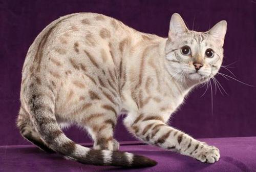 被家猫抓伤出血用打针吗?被家猫抓伤出血有事吗?