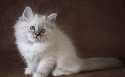 九尾猫的故事和启示