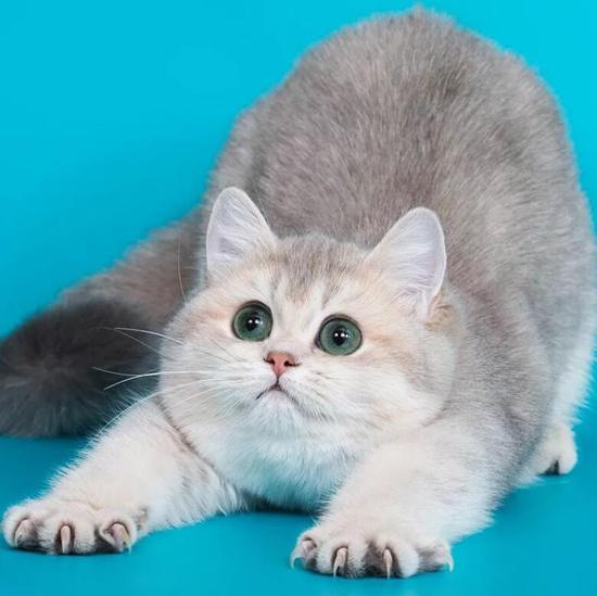 猫指甲套有用吗?猫指甲套对猫的危害是什么?