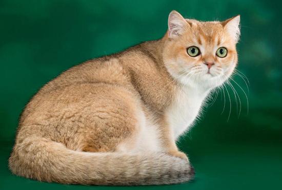 猫咪心理学:为什么猫看到你时会翻滚仰卧?