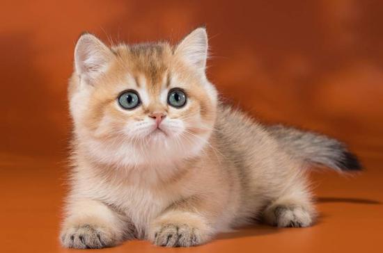 猫阿司匹林中毒时的症状,猫阿司匹林中毒治疗注意事项