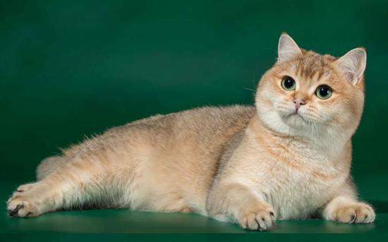 猫心率不齐症,猫心律不齐的可能原因,猫心率失常治疗