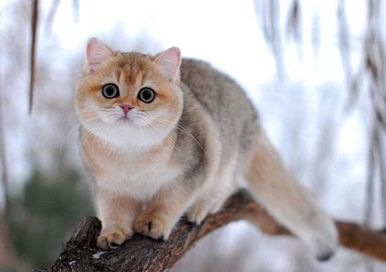 猫厌食症的示病症状,猫厌食症辅助疗法,猫厌食症治疗