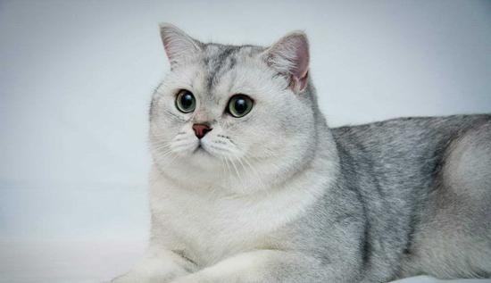 猫杯状病毒FCV引起的上呼吸道感染疾病,猫杯状病毒感染后的临床症状