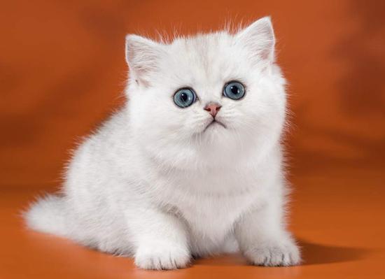 猫砂盆多久清理一次?猫砂盆放哪里最好?