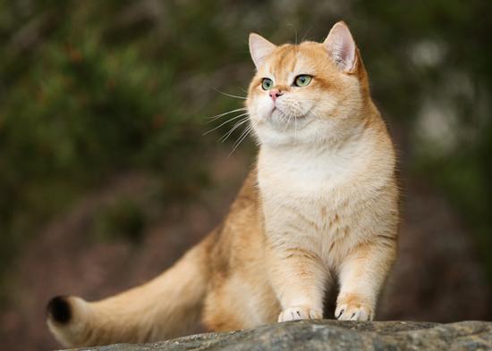 野猫进家有什么预兆?野猫和家猫的区别?