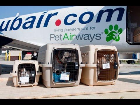 俄罗斯莫斯科、乌克兰宠物托运直飞回国入境,需狂犬病抗体滴度检测报告