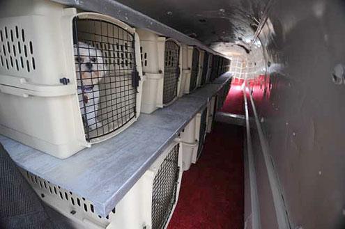 俄罗斯莫斯科、乌克兰的宠物跨境运输直飞托运回国服务