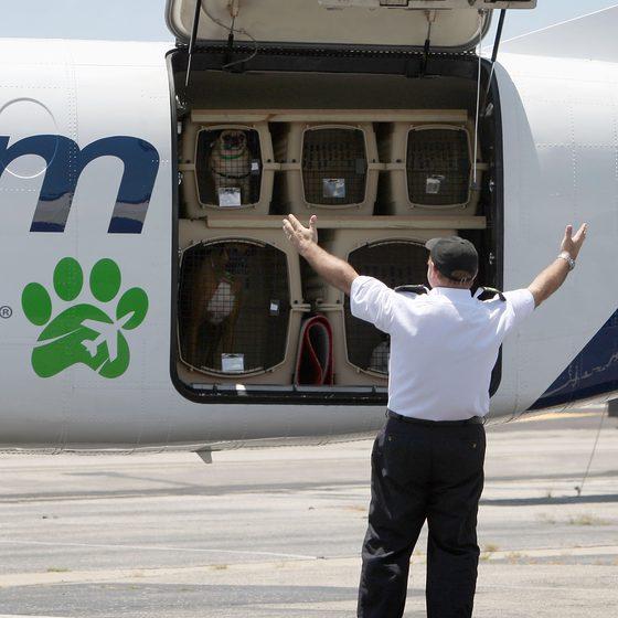 国际宠物运输、国际宠物托运回国,宠物入境隔离检疫口岸名单