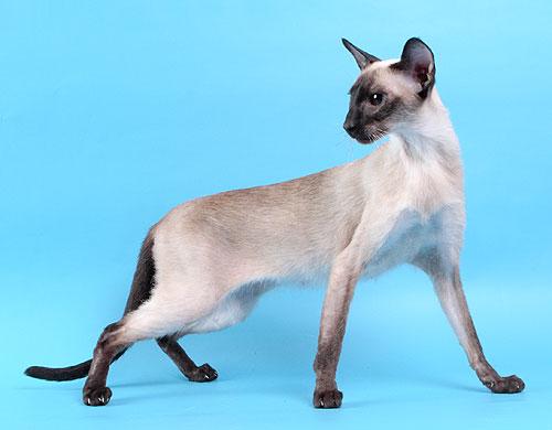 猫颈部屈曲病,猫头部不能抬起的综合征