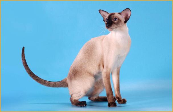 跳蚤会导致猫贫血吗?猫会死于贫血吗?